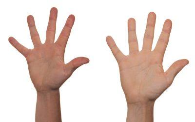 Píndola 7 – La morfologia de la mà humana