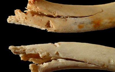Píndola 5 – El comportament dels ossos a la prehistòria