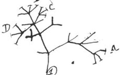 Classe 2 – La Teoria de l'Evolució